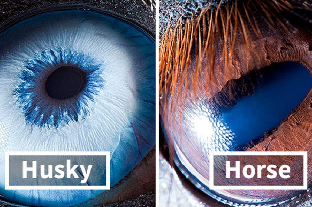 Suren Manvelyan: fotógrafo captura como os olhos dos animais são únicos