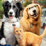 Cinema libera entrada de animais de estimacao em sessao Drive In