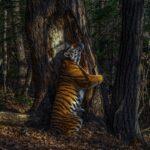 Confira as fotos vencedoras do Premio de Fotografia de Vida Selvagem 2020 1