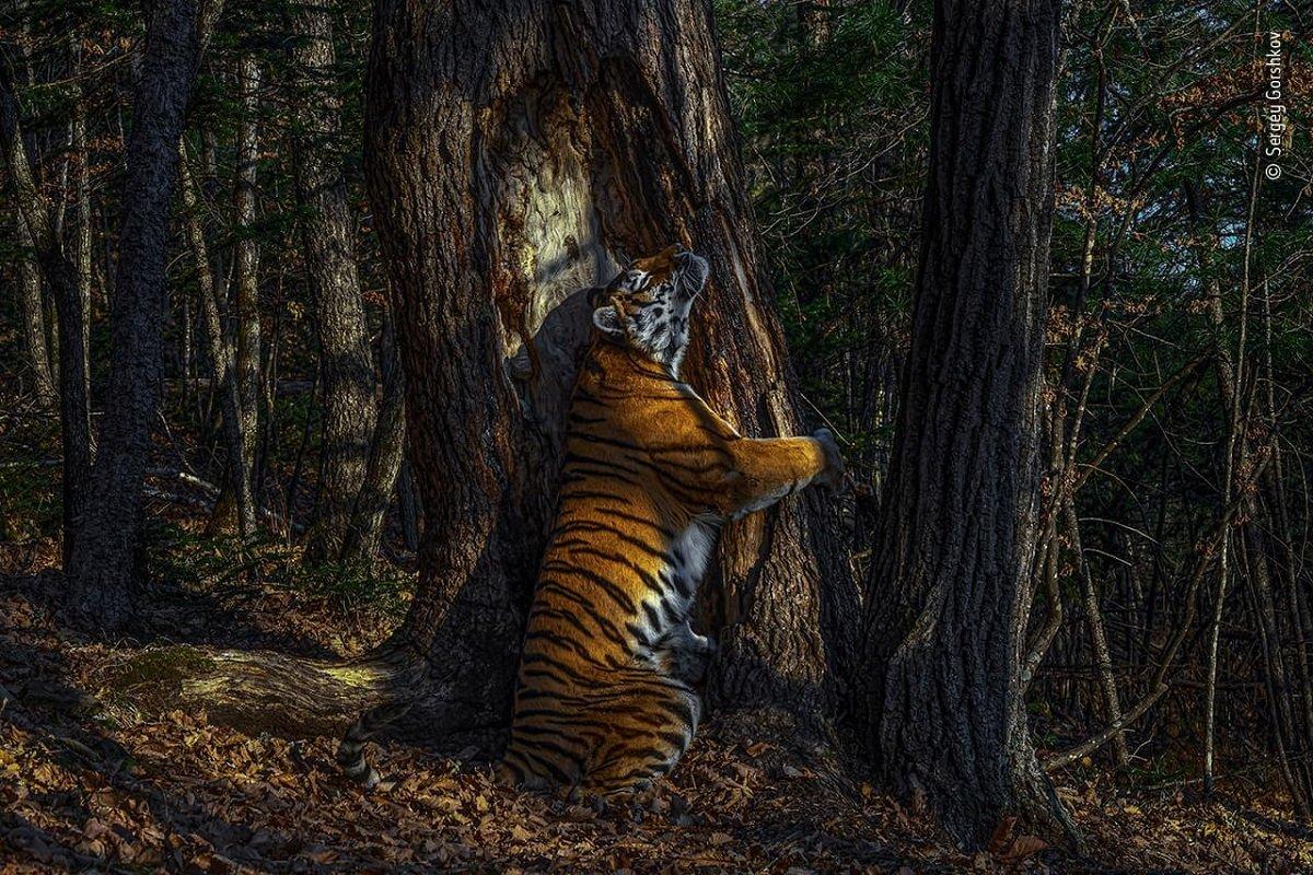 Confira as fotos vencedoras do Prêmio de Fotografia de Vida Selvagem 2020