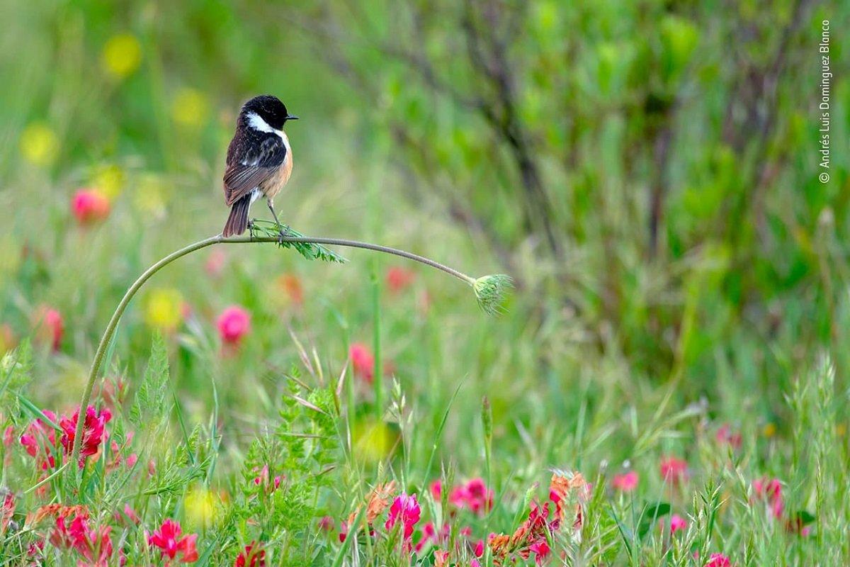 Confira as fotos vencedoras do Premio de Fotografia de Vida Selvagem 2020 3