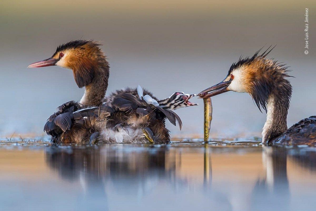 Confira as fotos vencedoras do Premio de Fotografia de Vida Selvagem 2020 4