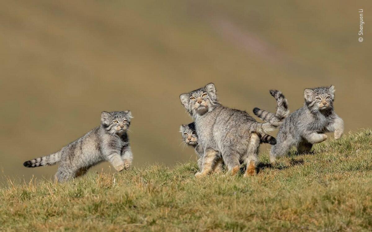 Confira as fotos vencedoras do Premio de Fotografia de Vida Selvagem 2020 6