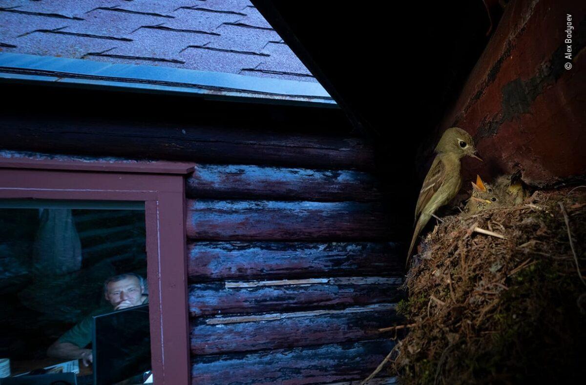 Confira as fotos vencedoras do Premio de Fotografia de Vida Selvagem 2020 8