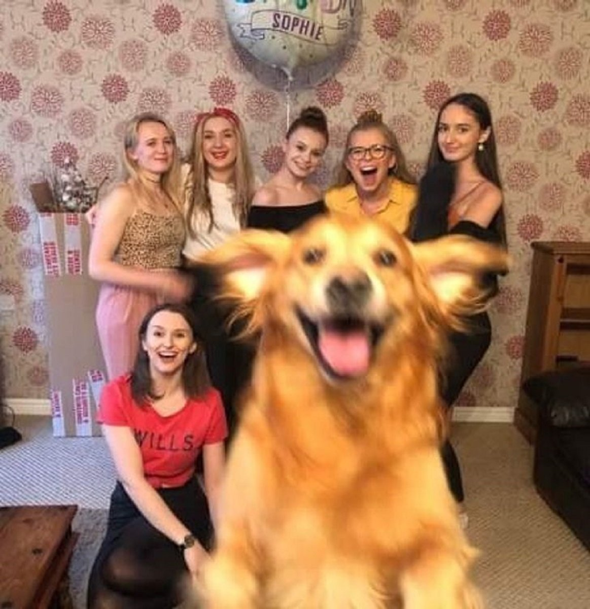 Essas fotos de cachorro foram tiradas no momento certo 18