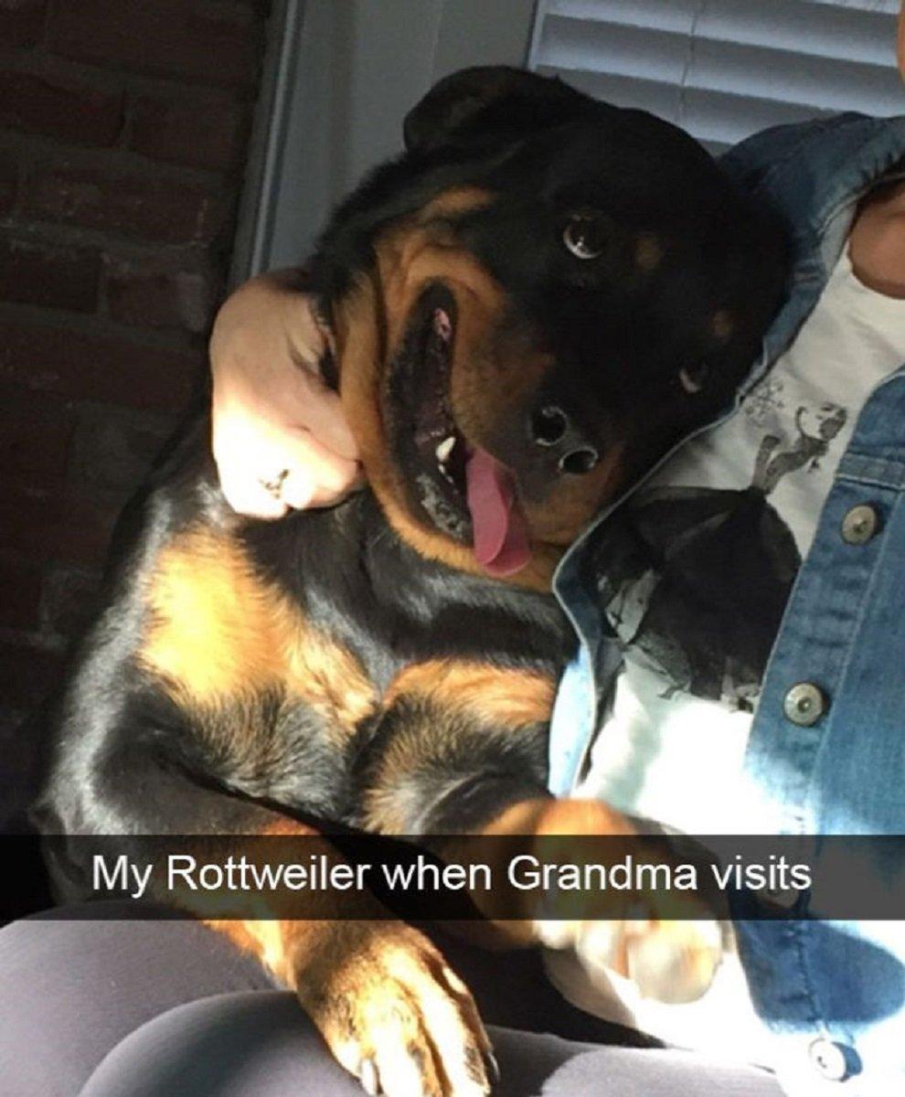 Essas fotos de cachorro foram tiradas no momento certo 26