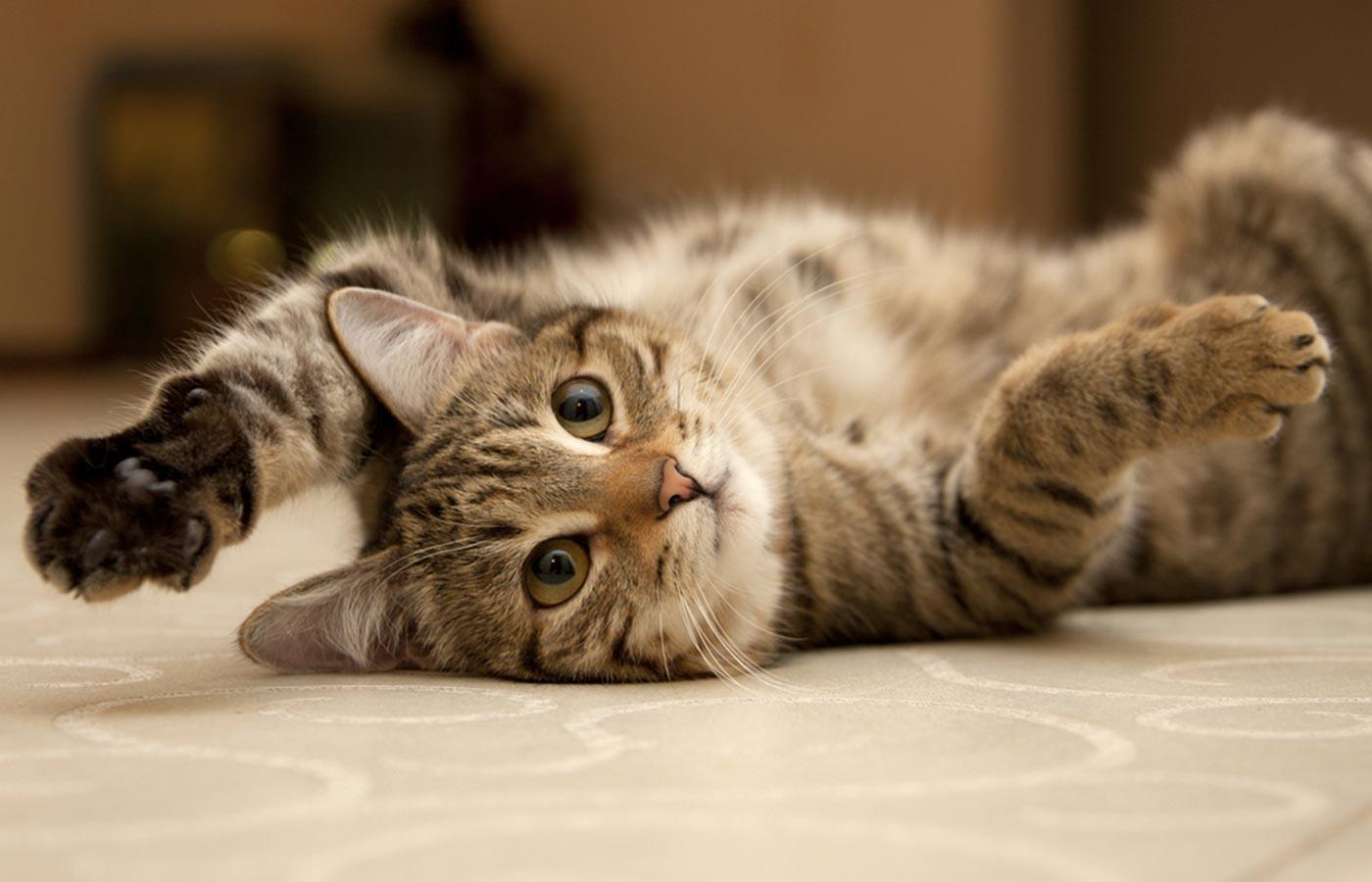 O que os gatos fazem enquanto dormimos