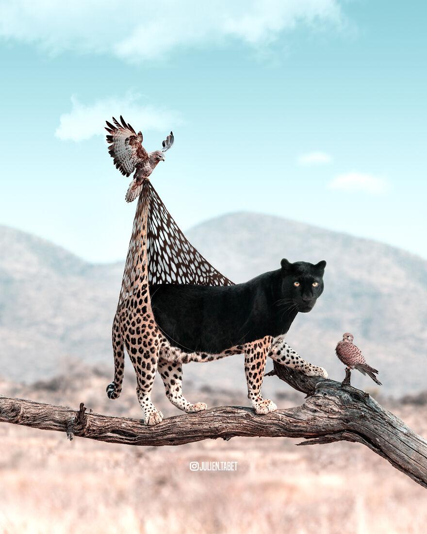 Julien Tabet artista mostra o que os animais fazem quando nao estamos olhando 1