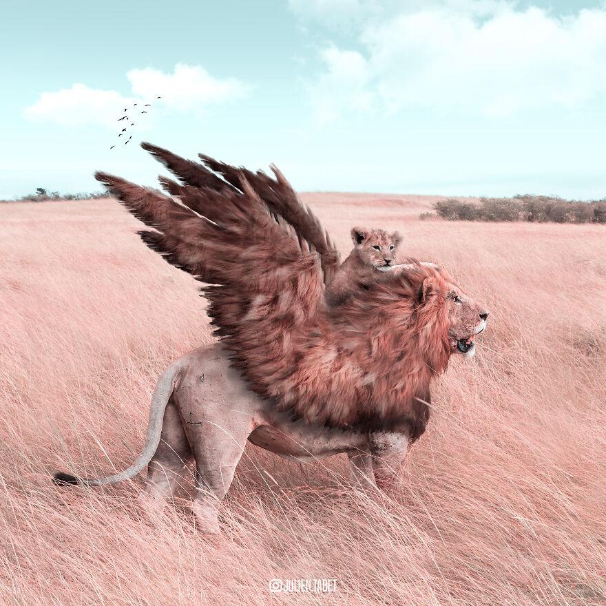 Julien Tabet artista mostra o que os animais fazem quando nao estamos olhando 10