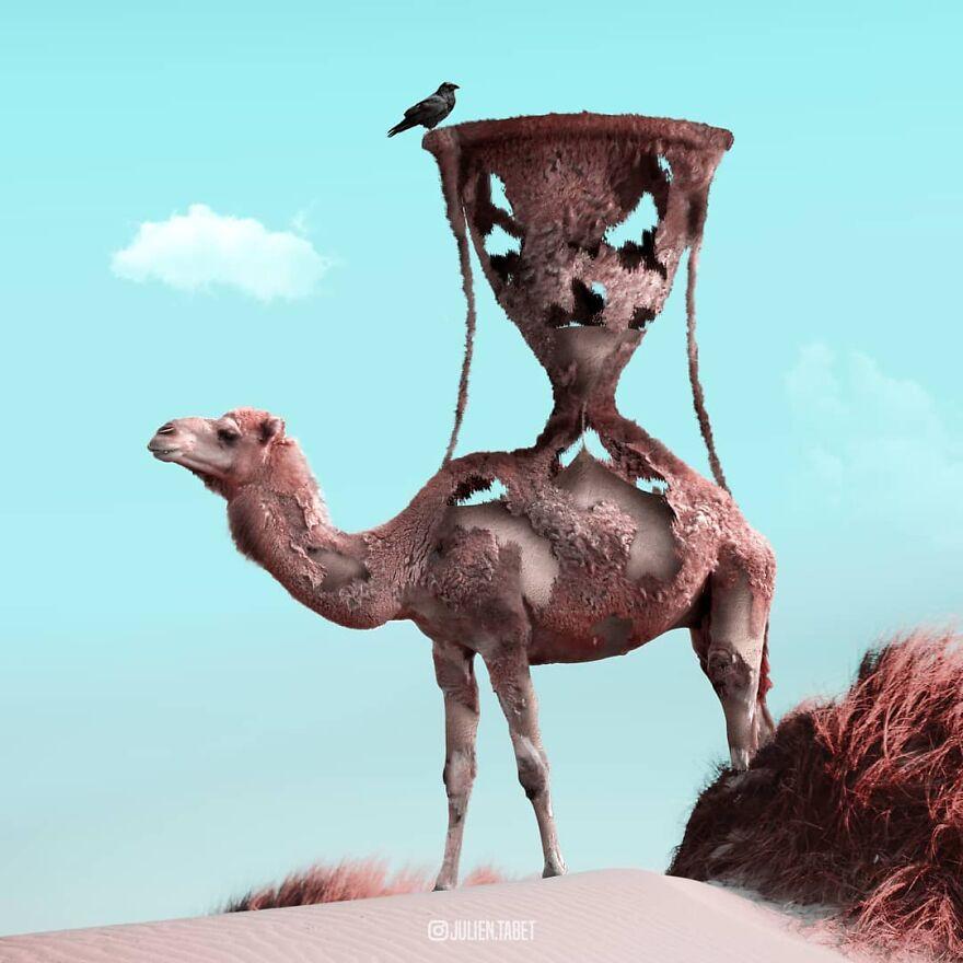 Julien Tabet artista mostra o que os animais fazem quando nao estamos olhando 11