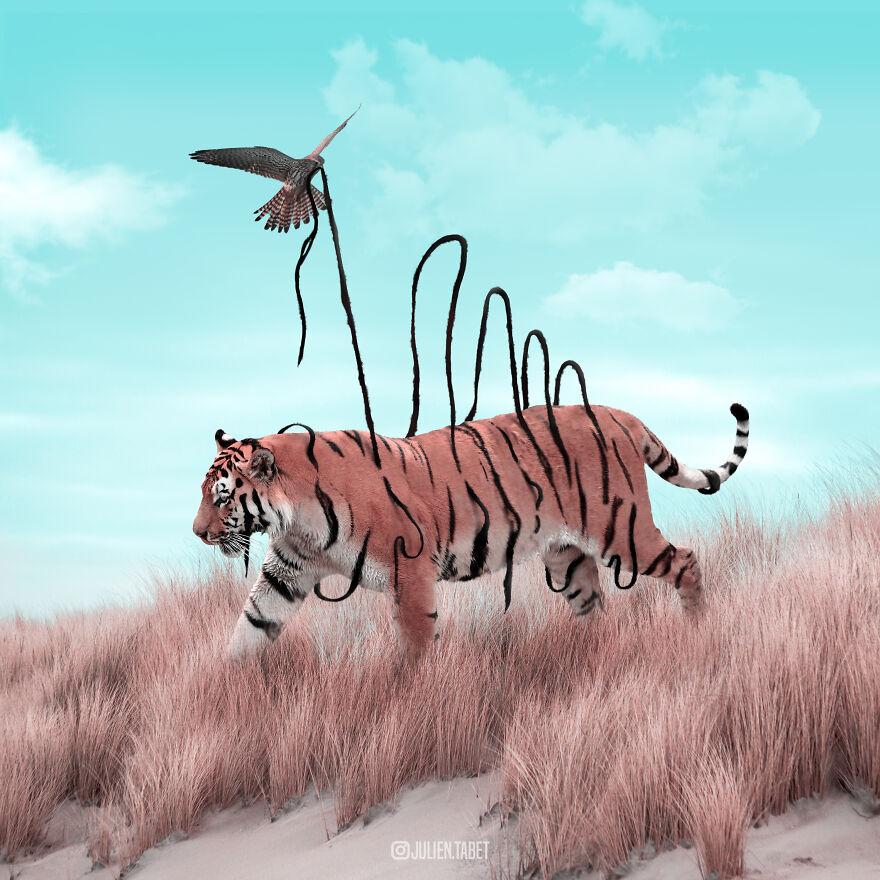 Julien Tabet artista mostra o que os animais fazem quando nao estamos olhando 13