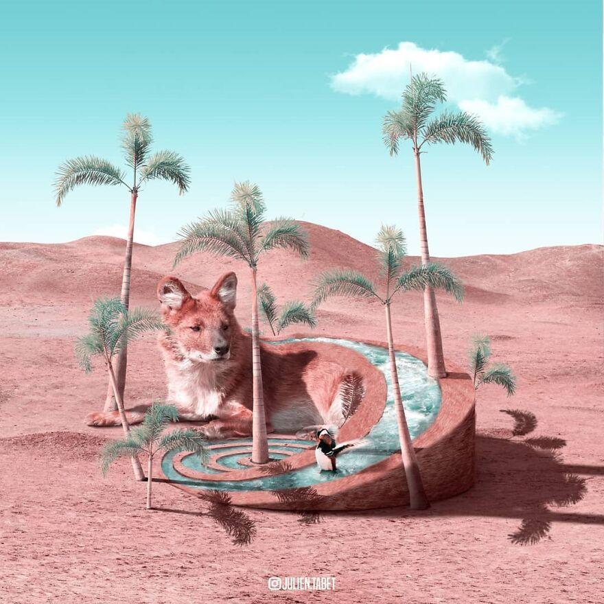 Julien Tabet artista mostra o que os animais fazem quando nao estamos olhando 17