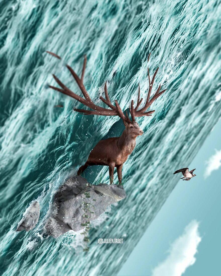 Julien Tabet artista mostra o que os animais fazem quando nao estamos olhando 18