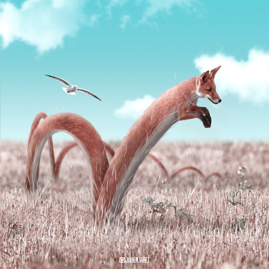 Julien Tabet artista mostra o que os animais fazem quando nao estamos olhando 2