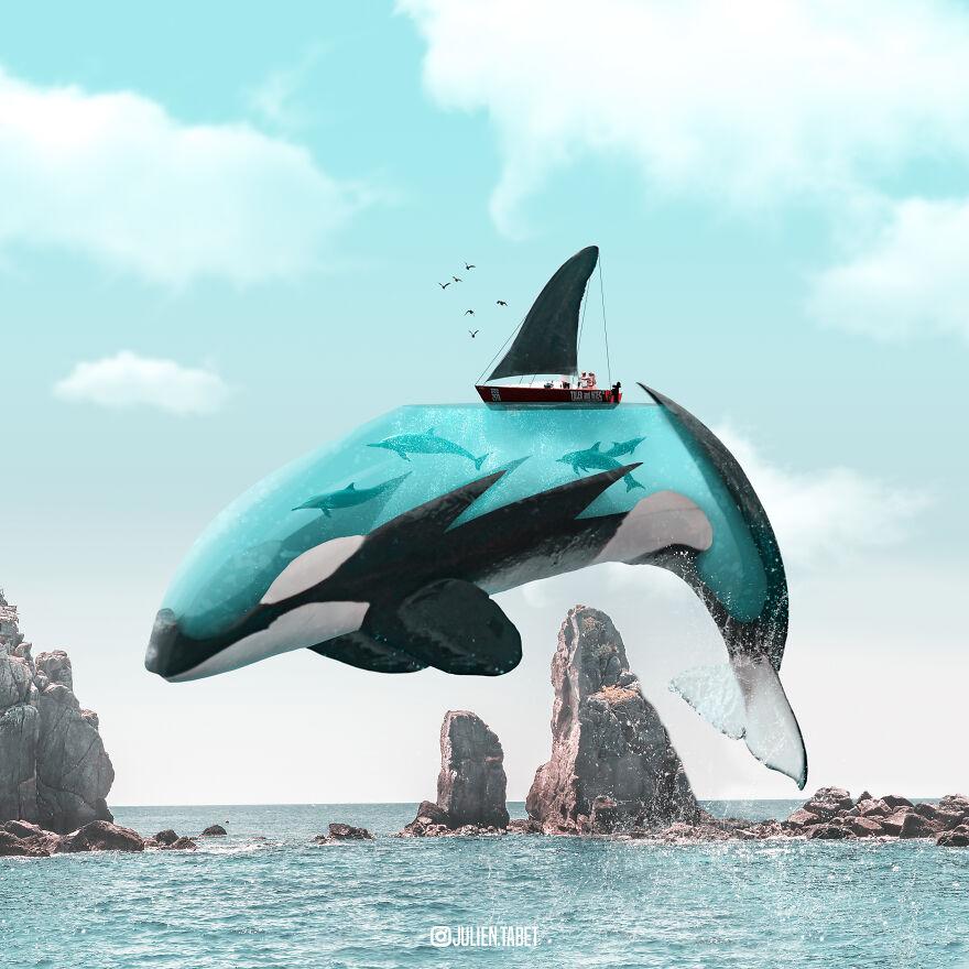 Julien Tabet artista mostra o que os animais fazem quando nao estamos olhando 20