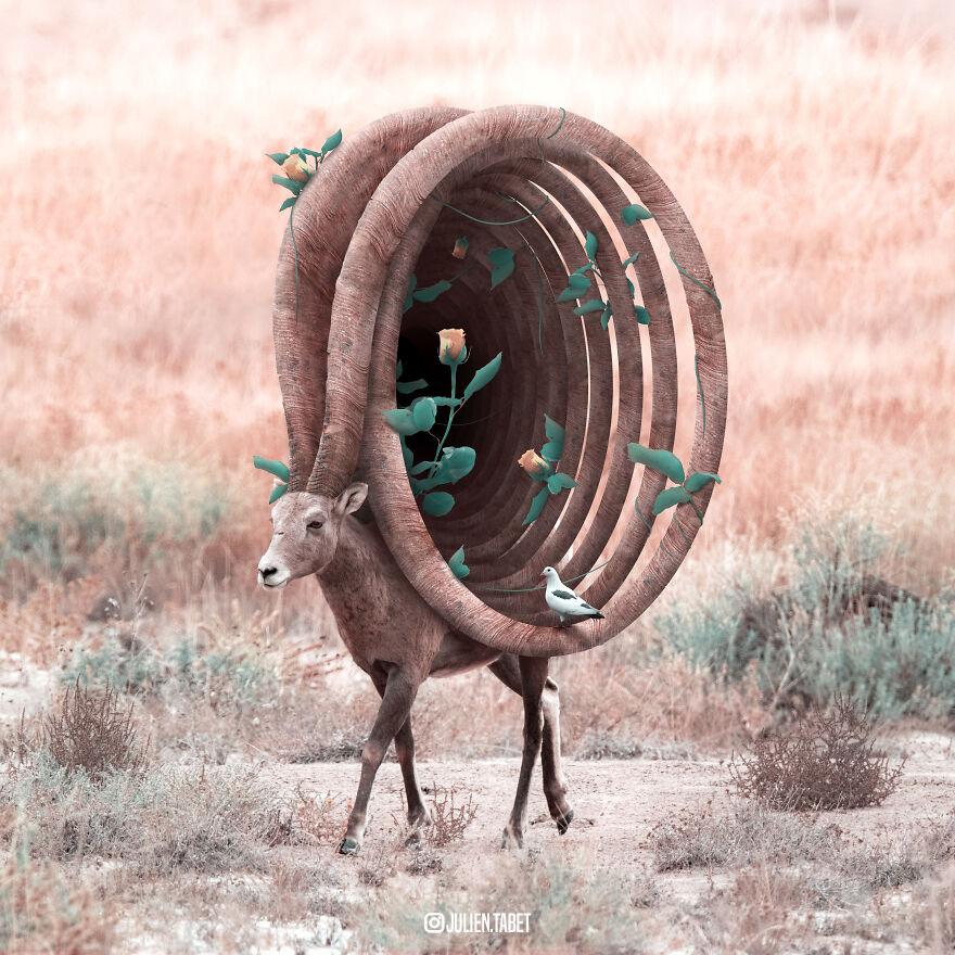 Julien Tabet artista mostra o que os animais fazem quando nao estamos olhando 21