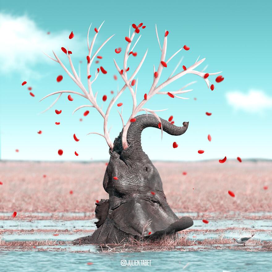 Julien Tabet artista mostra o que os animais fazem quando nao estamos olhando 23
