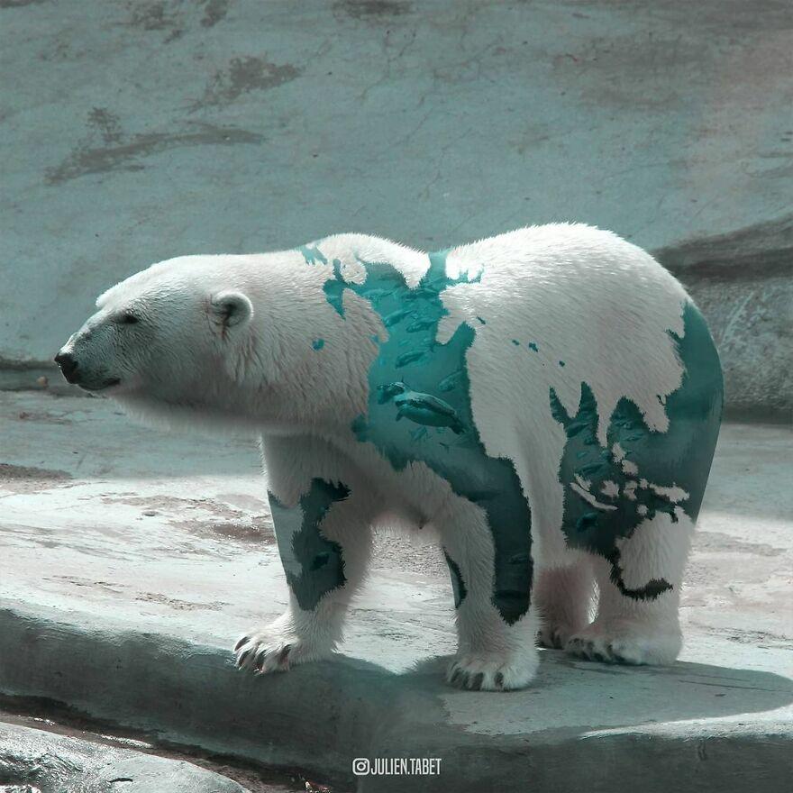 Julien Tabet artista mostra o que os animais fazem quando nao estamos olhando 3
