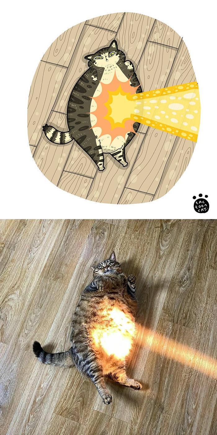 Tactoonca artista indonesio redesenha memes de gatinhos 10