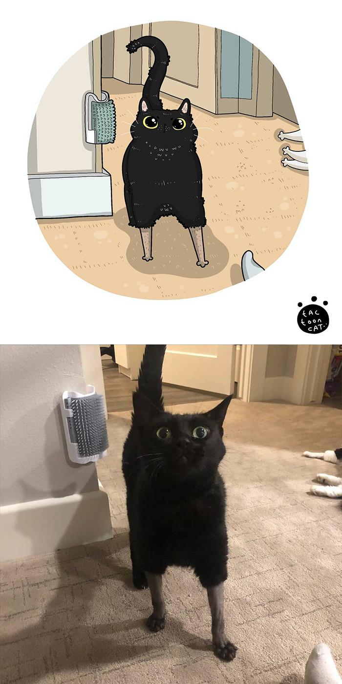 Tactoonca artista indonesio redesenha memes de gatinhos 11