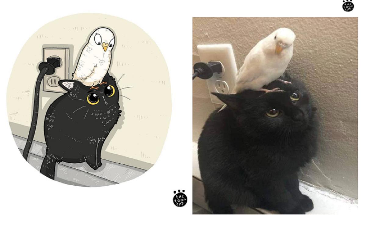 Tactoonca: artista indonésio redesenha memes de gatinhos