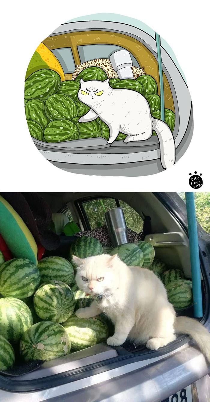 Tactoonca artista indonesio redesenha memes de gatinhos 5