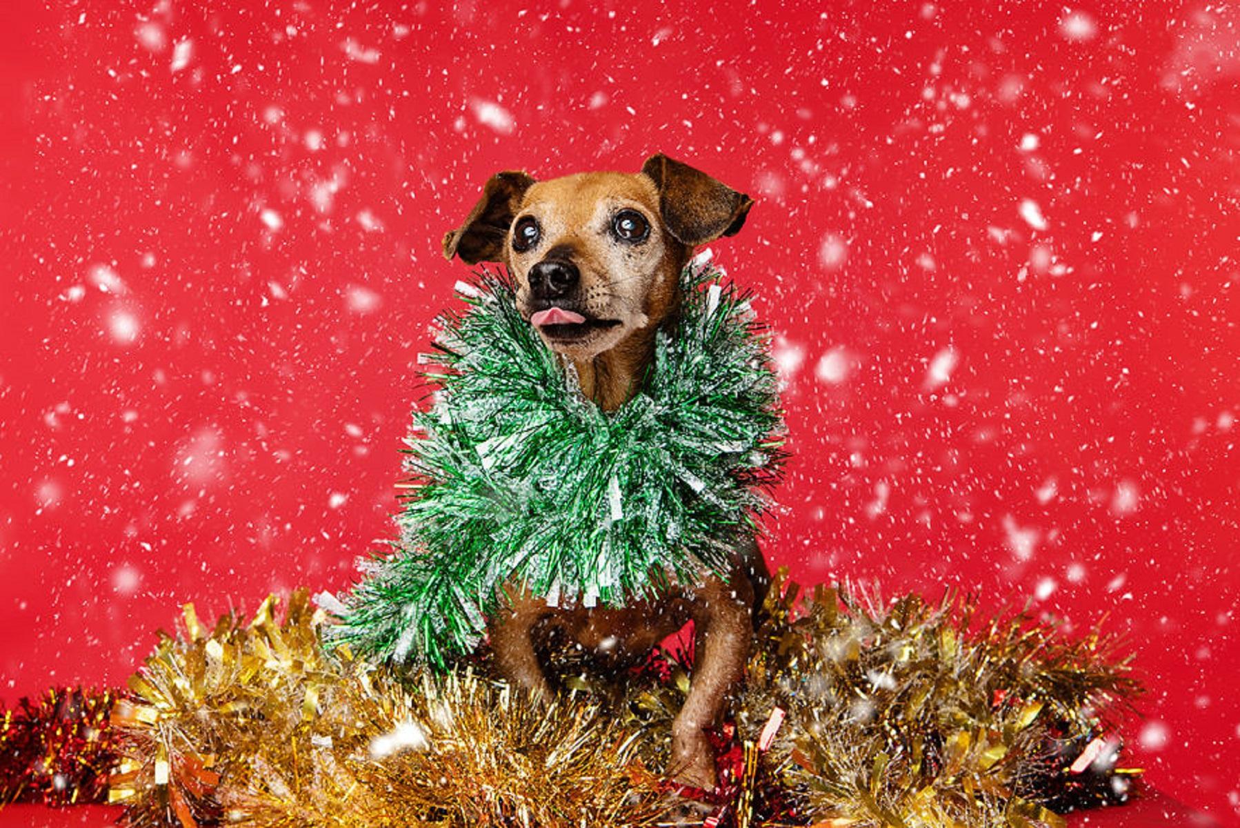 12 caes do Natal essa sessao de fotos natalinas vai te ajudar a entrar no espirito natalino 10