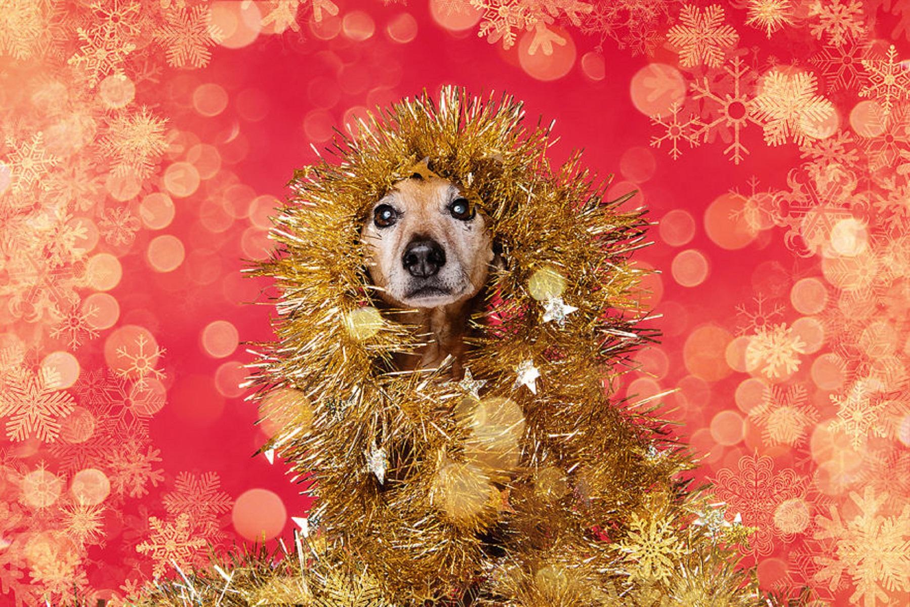 12 caes do Natal essa sessao de fotos natalinas vai te ajudar a entrar no espirito natalino 11