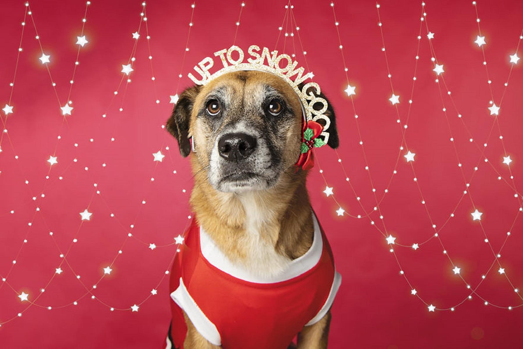 12 caes do Natal essa sessao de fotos natalinas vai te ajudar a entrar no espirito natalino 2