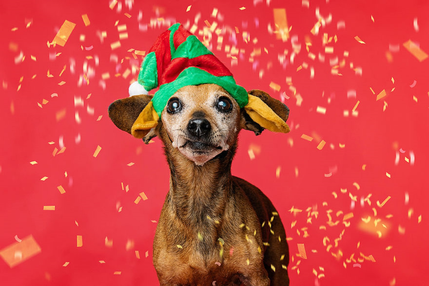 12 caes do Natal essa sessao de fotos natalinas vai te ajudar a entrar no espirito natalino 3
