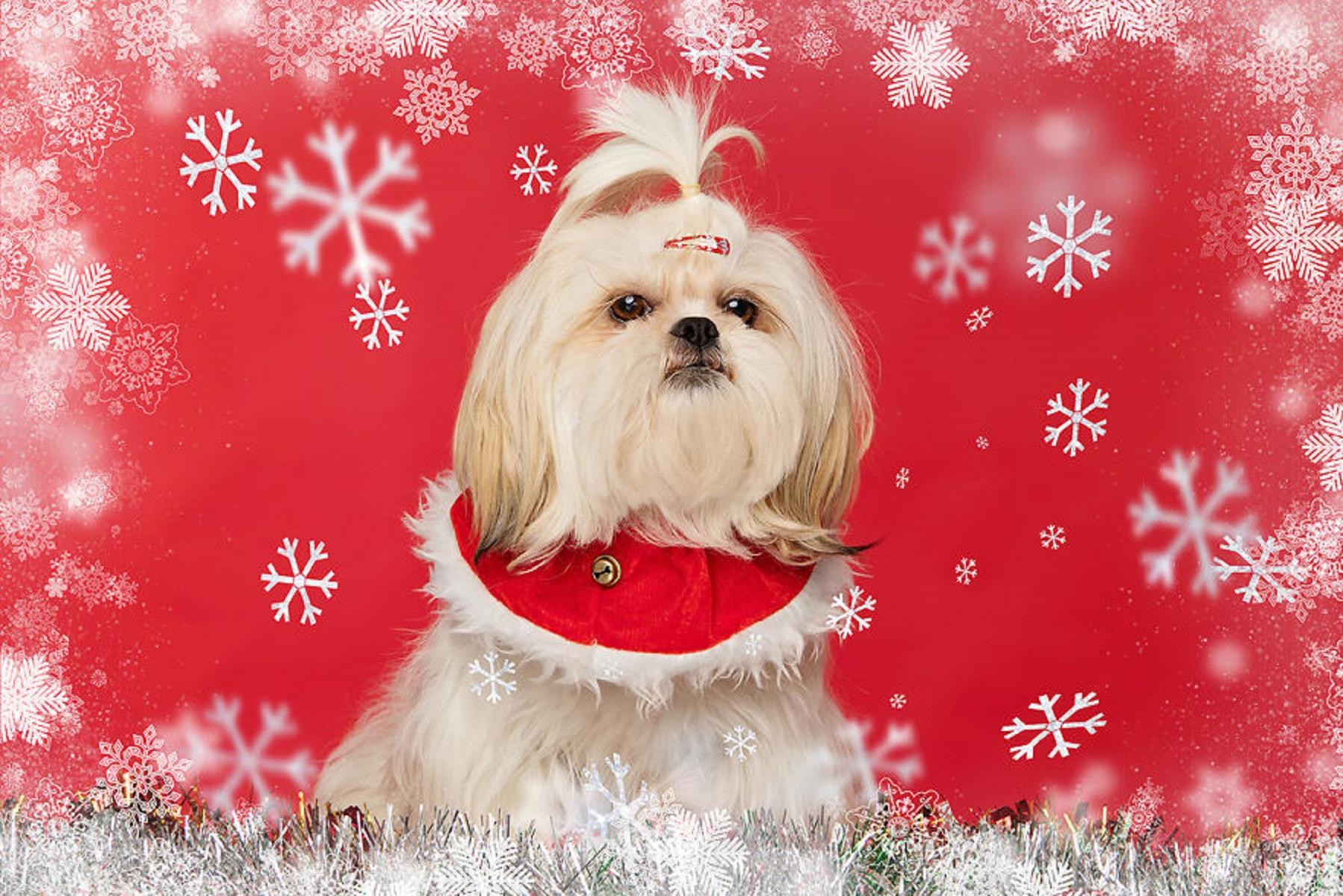 12 caes do Natal essa sessao de fotos natalinas vai te ajudar a entrar no espirito natalino 4
