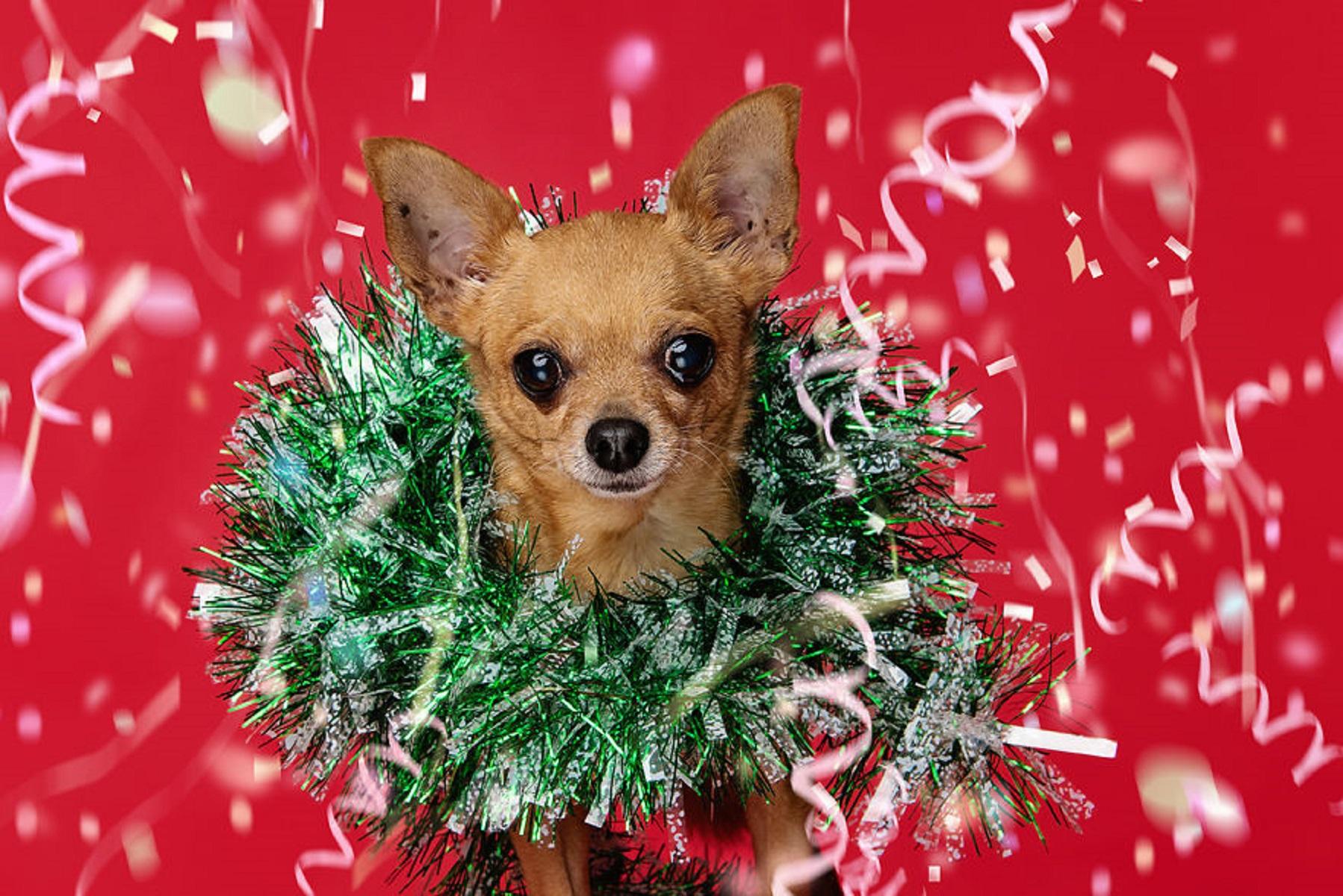12 caes do Natal essa sessao de fotos natalinas vai te ajudar a entrar no espirito natalino 5