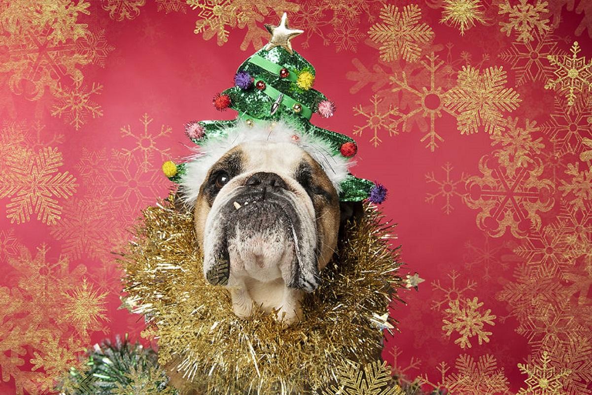 '12 cães do Natal': essa sessão de fotos natalinas vai te ajudar a entrar no espírito natalino