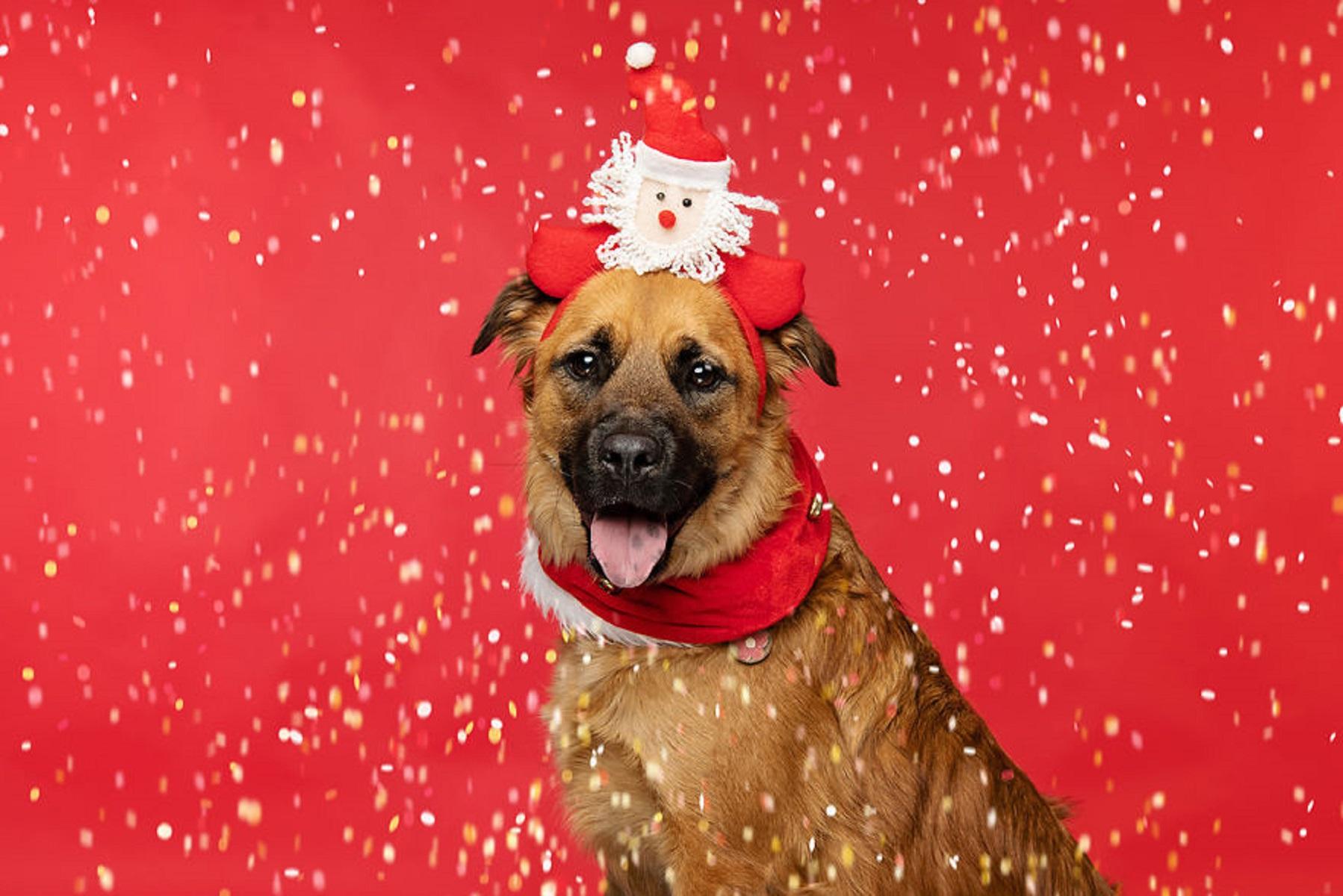 12 caes do Natal essa sessao de fotos natalinas vai te ajudar a entrar no espirito natalino 6