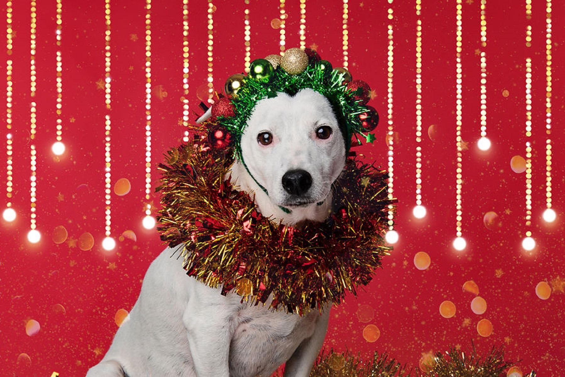 12 caes do Natal essa sessao de fotos natalinas vai te ajudar a entrar no espirito natalino 7