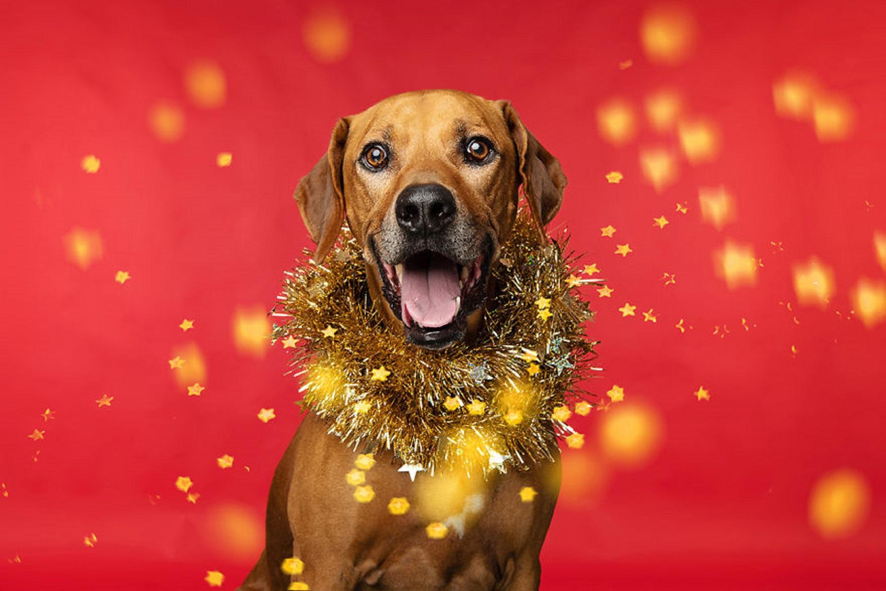 12 caes do Natal essa sessao de fotos natalinas vai te ajudar a entrar no espirito natalino 9