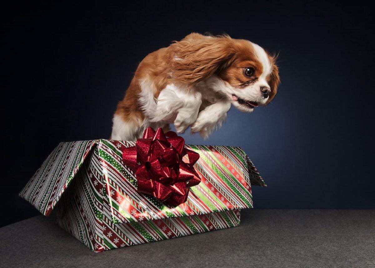 Fotos de Natal de caes essas belezuras ja estao preparadas para o fim de ano 13