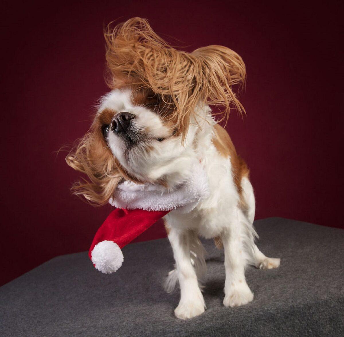 Fotos de Natal de caes essas belezuras ja estao preparadas para o fim de ano 19