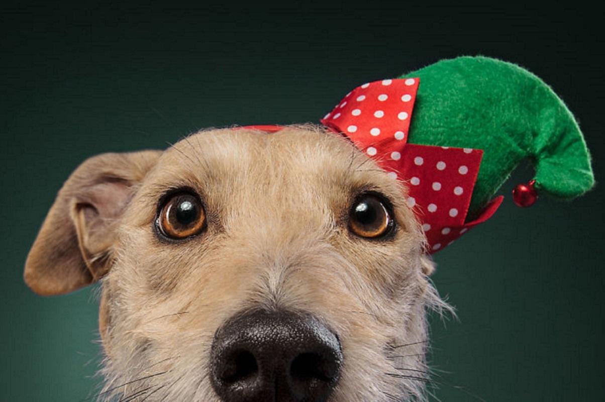 Fotos de Natal de cães: essas belezuras já estão preparadas para o fim de ano