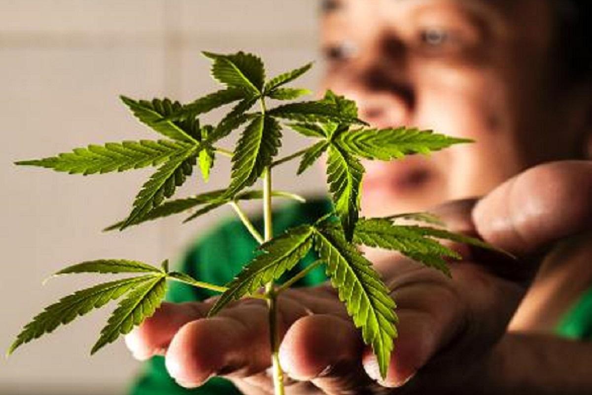 ONU retira maconha da lista de drogas mais perigosas