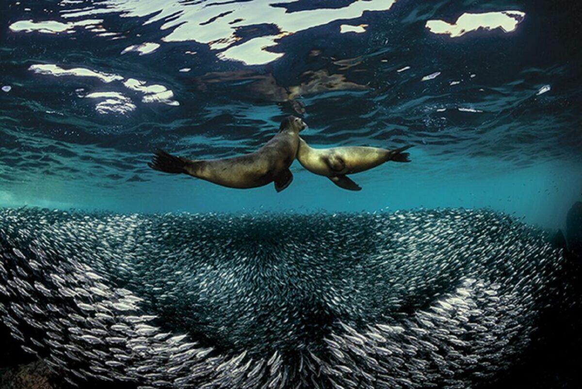 Through Your Lens Underwater Photo Contest confira as melhores fotos submersas de 2020 14