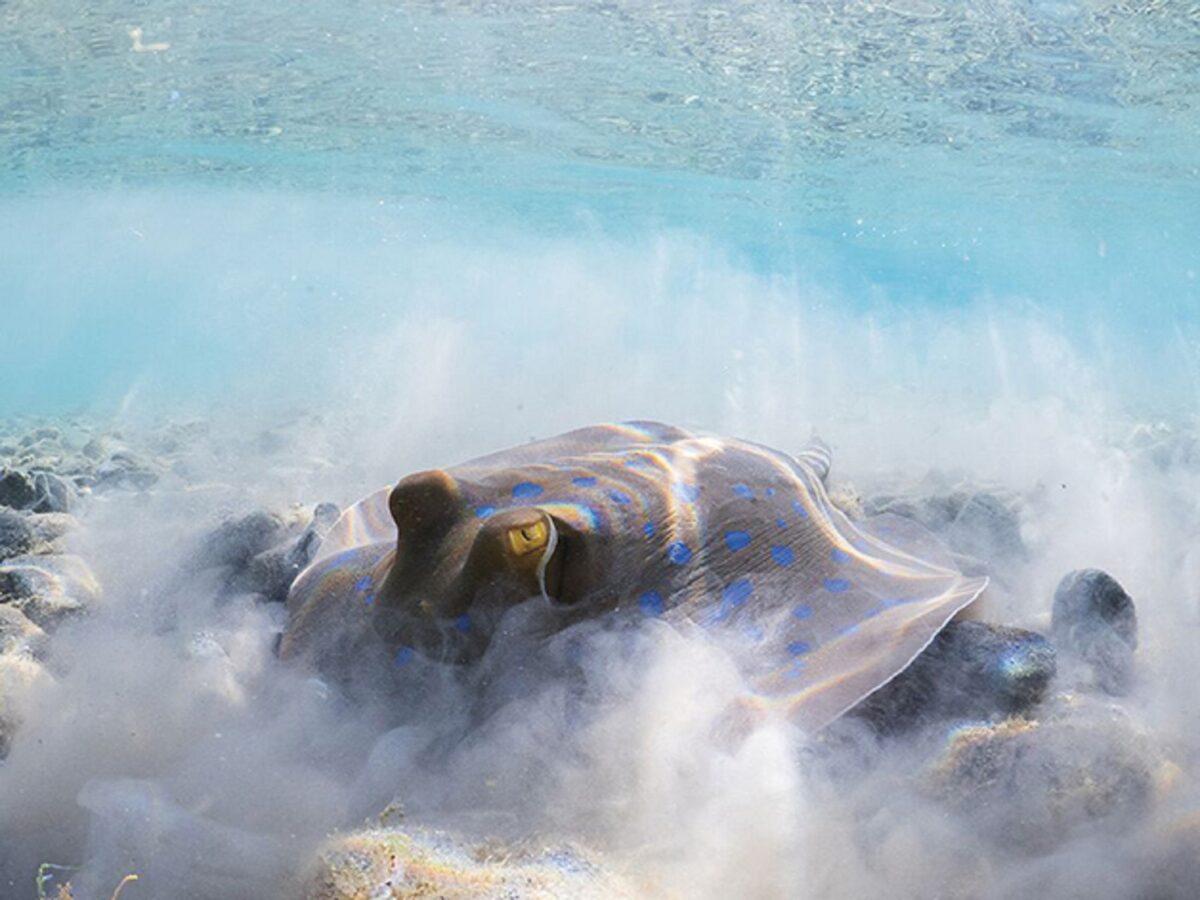 Through Your Lens Underwater Photo Contest confira as melhores fotos submersas de 2020 4