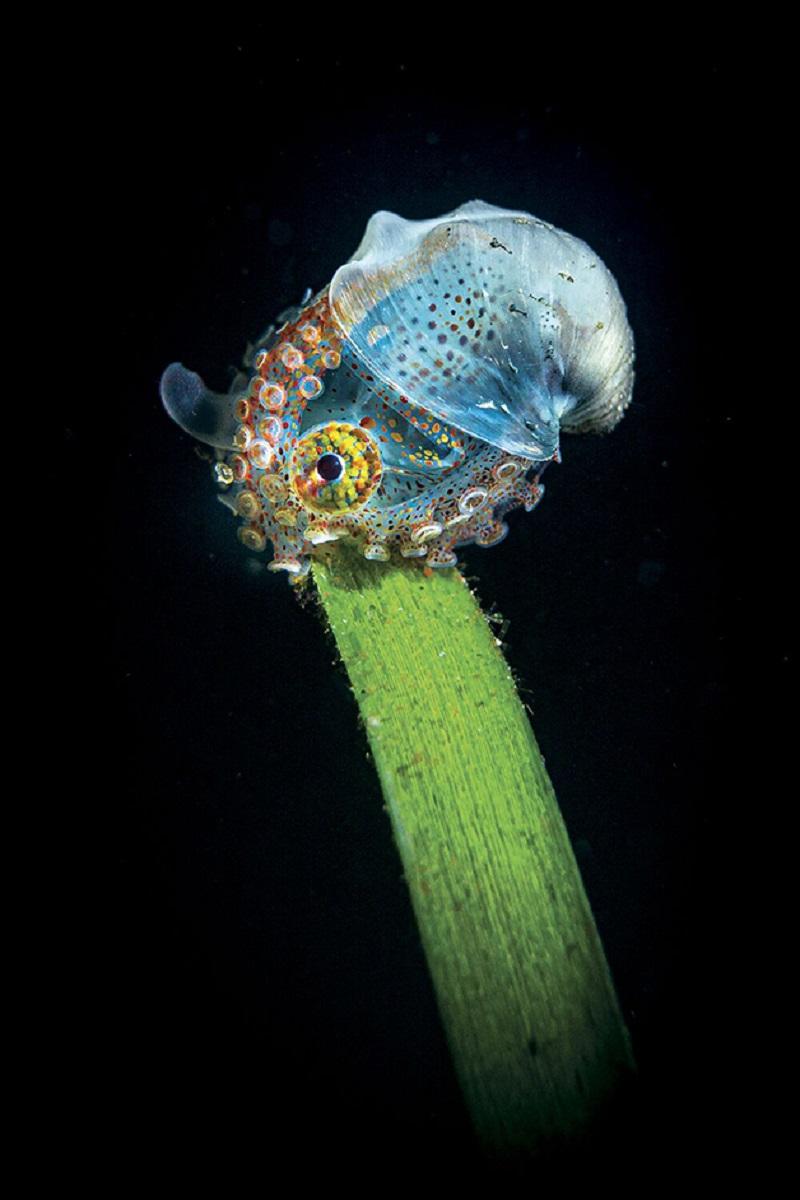 Through Your Lens Underwater Photo Contest confira as melhores fotos submersas de 2020 5