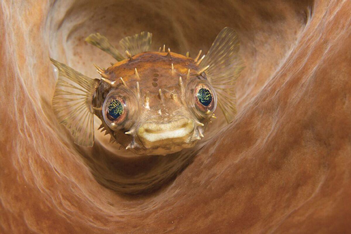 Through Your Lens Underwater Photo Contest confira as melhores fotos submersas de 2020 6