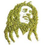 Cannabiscapes artistas fazem retratos com maconha 2