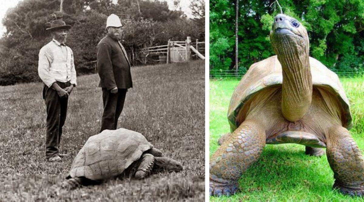 Imagens de antes e depois que mostram que nao devemos temer a passagem do tempo 18