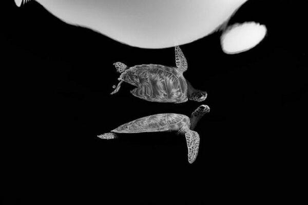 Premio de Fotografo Subaquatico do Ano de 2021 50