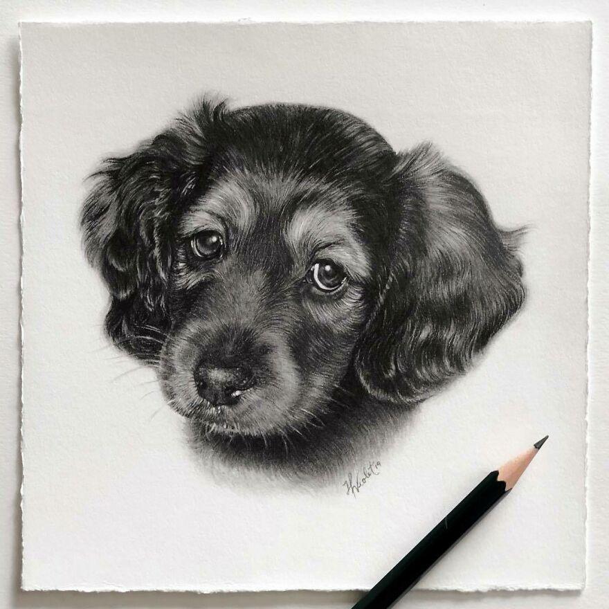 Helen Violet: artista canadense cria retratos realistas de animais de estimação a lápis