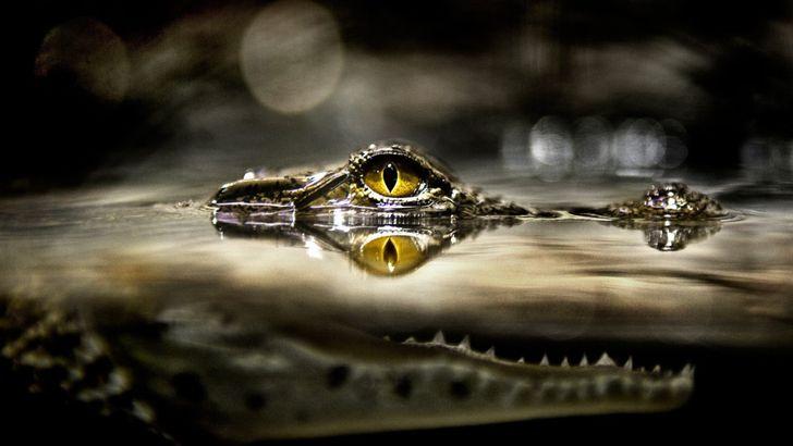 Fotos engracadas de animais a partir de angulos inusitados 10