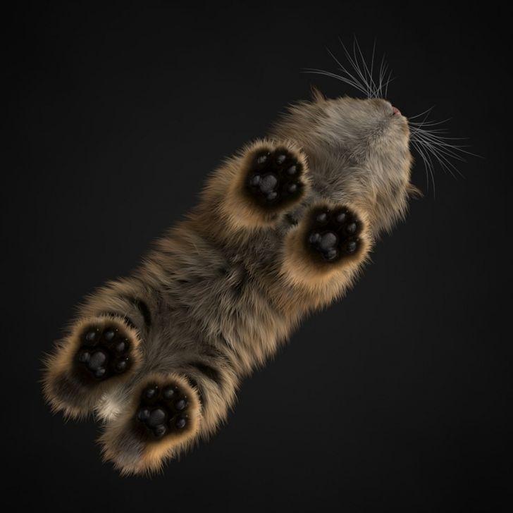 Fotos engracadas de animais a partir de angulos inusitados 14